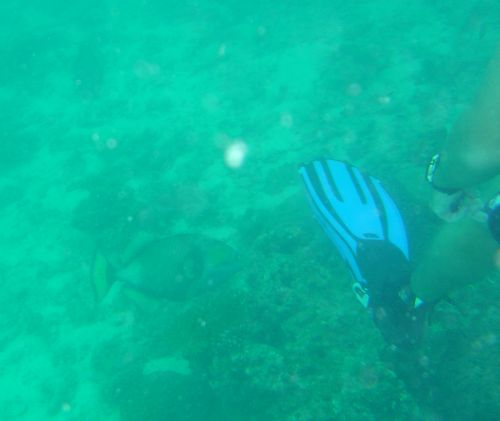 Titan Triggerfish gets more air