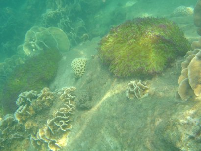 Hard and soft Corals outside Koh Chang
