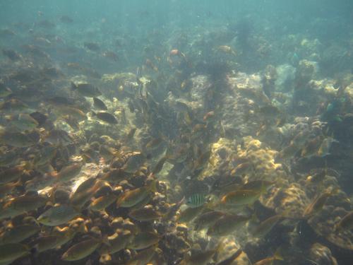 Fishes at Koh Kong Kang Sihanoukville, Cambodia
