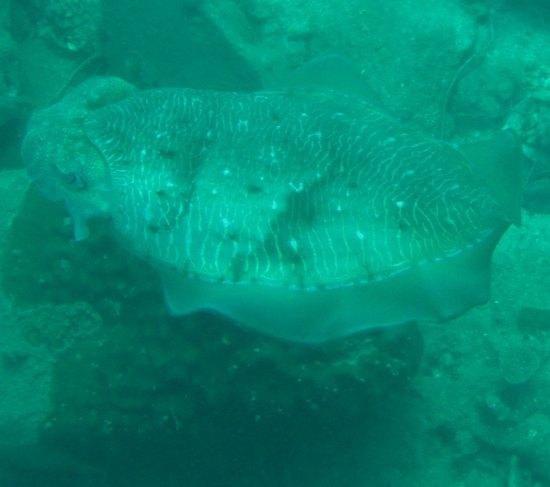 Strange fish found diving outside Koh Chang